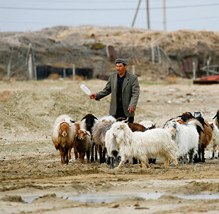 A man walks with livestock at the village of Karateren, near the Aral Sea, south-western Kazakhstan, April 15, 2017. Akespe, home to some 250 people, and Karateren, inhabited by about 150, used to be dominated by fishermen until the water receded too far away - but it is now back in Karateren.